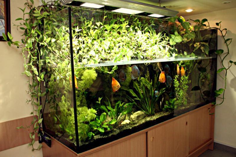 Инструкция Как Ухаживать С Аквариумными Рыбами