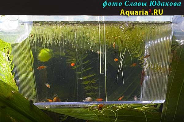 Отсадник в аквариум своими руками 528