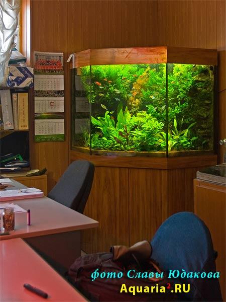 угловой аквариум в офисе