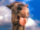 Аватар пользователя Alekaz