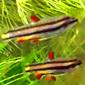 Аватар пользователя Papuas