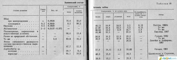 artemiya_tablica.jpg