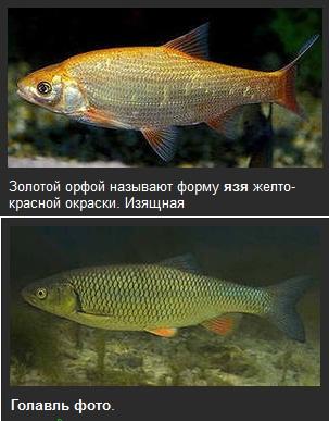 snimok7.jpg