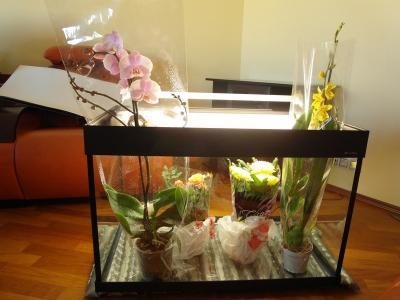 orhidei.jpg