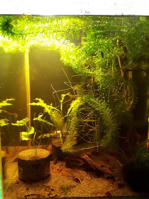 http://aquaria.ru/files/u11771/20181016_185308_0.jpg