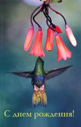 kolibri-s_dnem.jpg