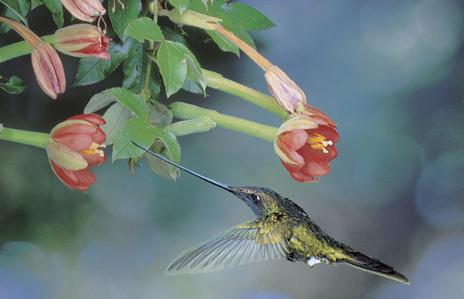 kolibri3.jpg