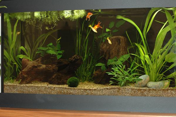 aquarium18-07-2013.png