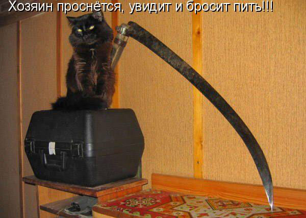 1333038736_koshachi_prikoly_5.jpg