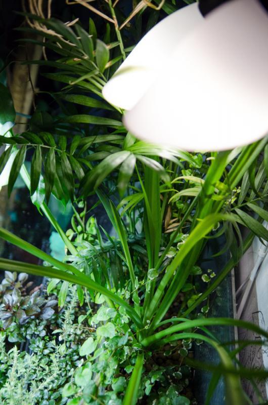 akvarium6.jpg