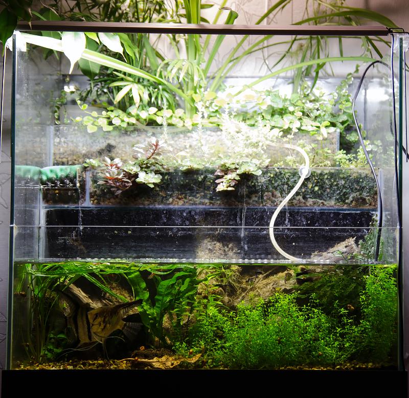 akvarium_1.jpg