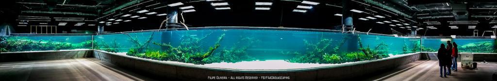"""Cамый большой в мире аквариум """"Подводные леса""""."""