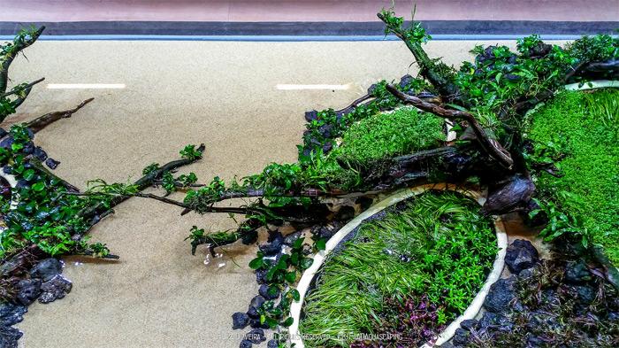 """Самый большой в мире природный аквариум  Такси Амано """"Затопленные леса""""."""
