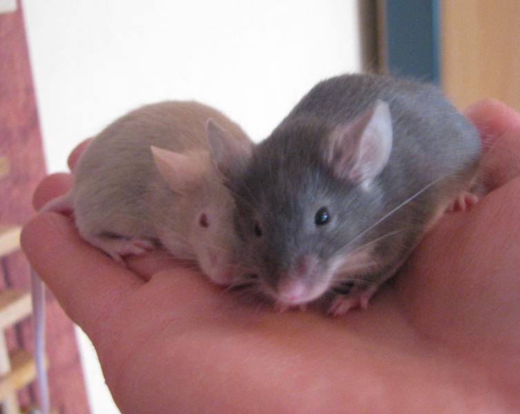 mice_3.jpg