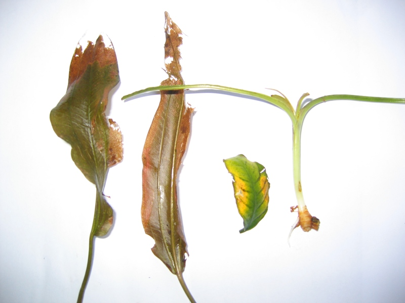 plants05_2014.jpg