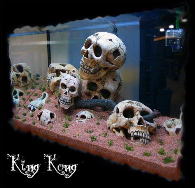 skull_2_kingkong.jpg