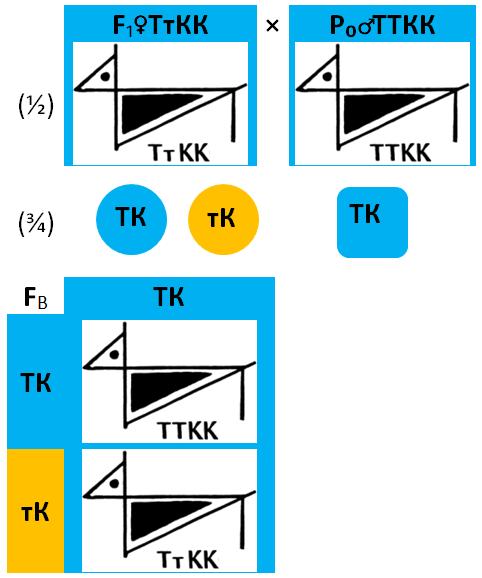 1.1.1.2-12-34_-f1ttkkxp0ttkk.png