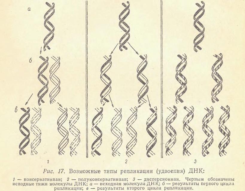 p54lobashev_me_genetika_l_izd-vo_lgu_1969.png