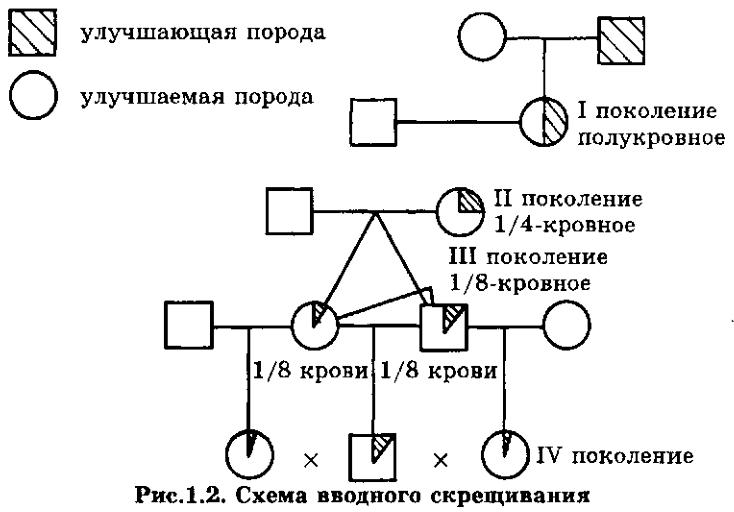 p_22antonjuk_v.s._osnovy_zhivotnovodstva_minsk_dizajn_pro_1997_512_p.png