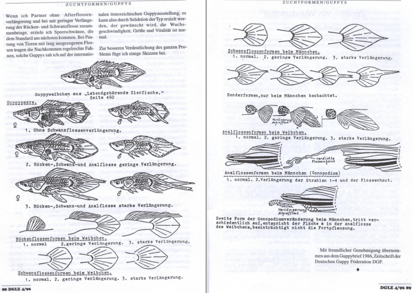 964-dglz_4-1996p88-89.png