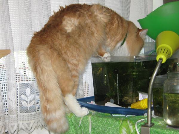 Котейкка на водопое...