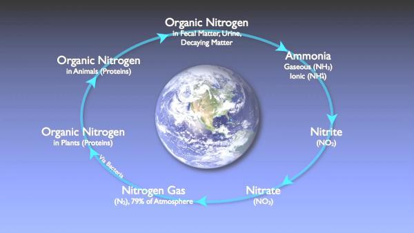 nitrogen_removal_basics-0-00-16-796.jpg