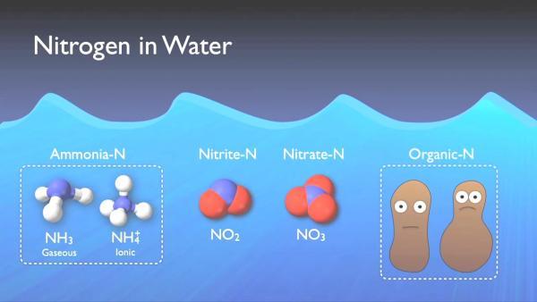 nitrogen_removal_basics-0-01-30-715.jpg