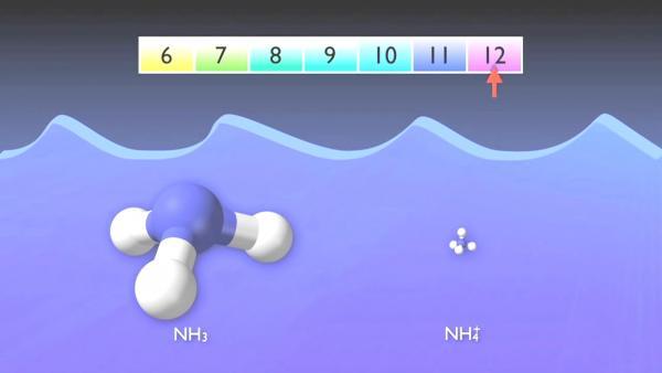 nitrogen_removal_basics-0-03-26-977.jpg