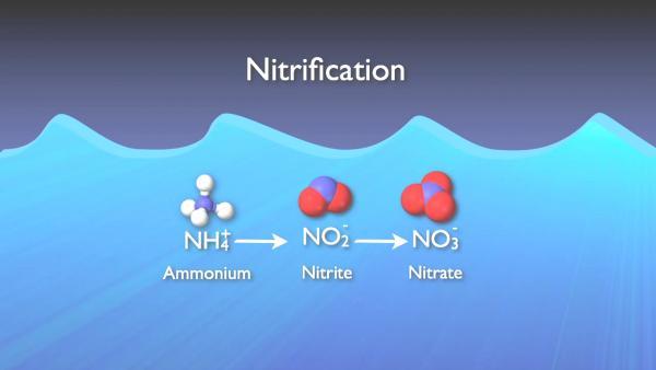nitrogen_removal_basics-0-03-54-151.jpg