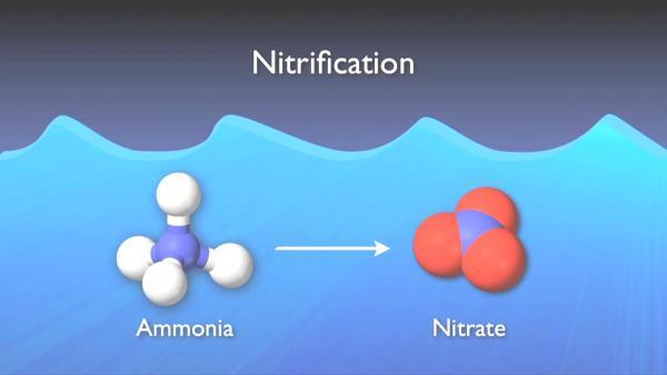 nitrogen_removal_basics-0-07-15-475.jpg
