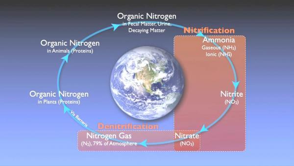 nitrogen_removal_basics-0-11-36-250.jpg