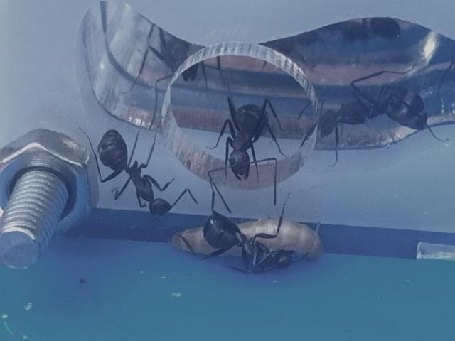 http://aquaria.ru/files/u4017/img_20200115_125124_1_0.jpg