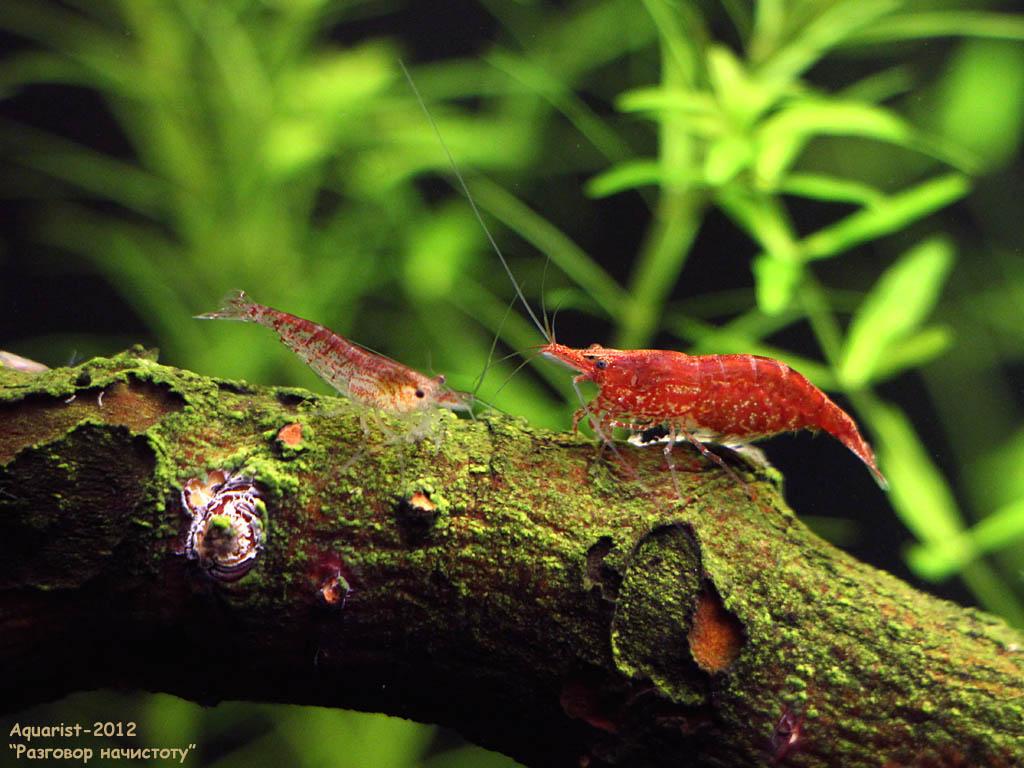20121006_030l_cherries-fm-talking_650d_0295a.jpg