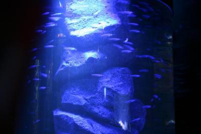 akvariumy_041_1.jpg