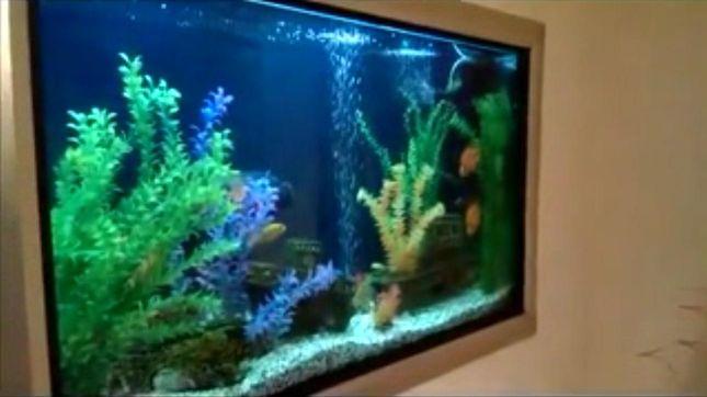 akvarium_yacenyuka.jpg