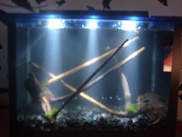 Светодиодное освещение в аквариуме своими руками