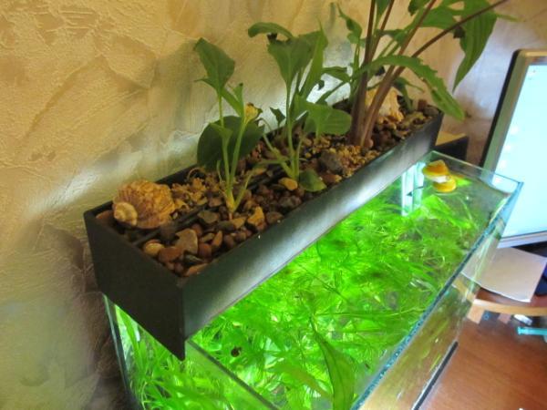 Фитофильтр своими руками для аквариума